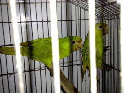 70 pássaros silvestres de diferentes espécies